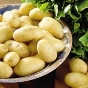 картофель ранний семенной