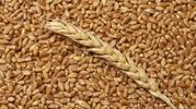 Продаем пшеницу 2 кл и 3 кл