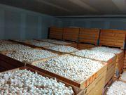 Камера хранения грибов