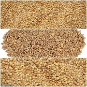 Зерновые куплю дорого