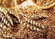 Куплю зерновые. Продать зерновые
