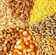 Закупаем зерновые в неограниченных количествах по Украине