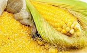 Закупаем зерновые выгодно
