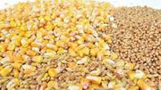 Закупаю зерновые по всей территории Украины